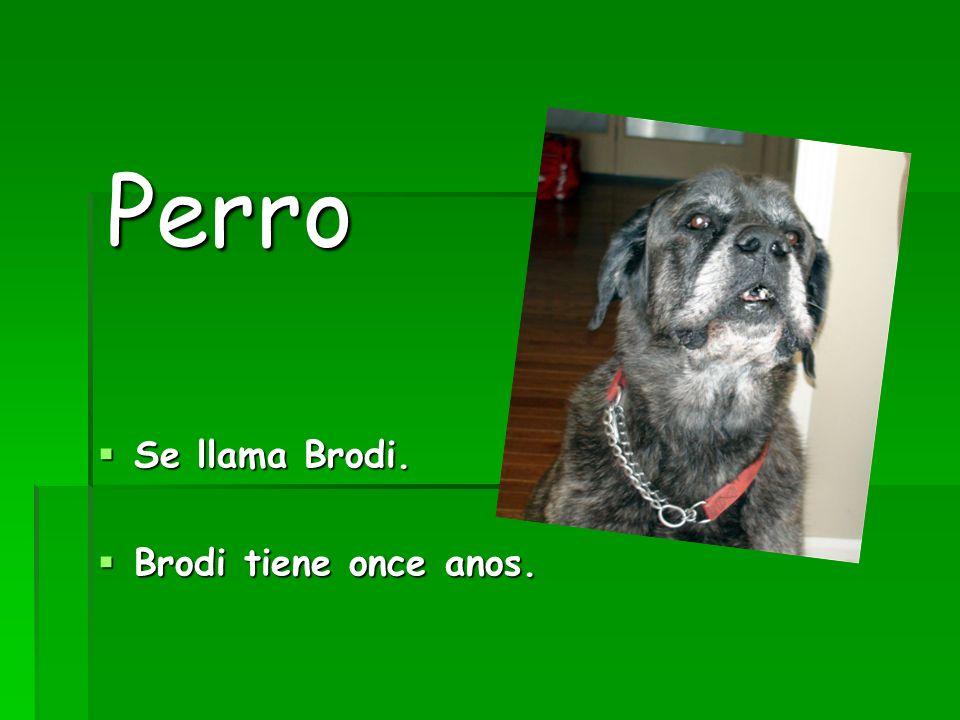 Perro Se llama Brodi. Brodi tiene once anos.