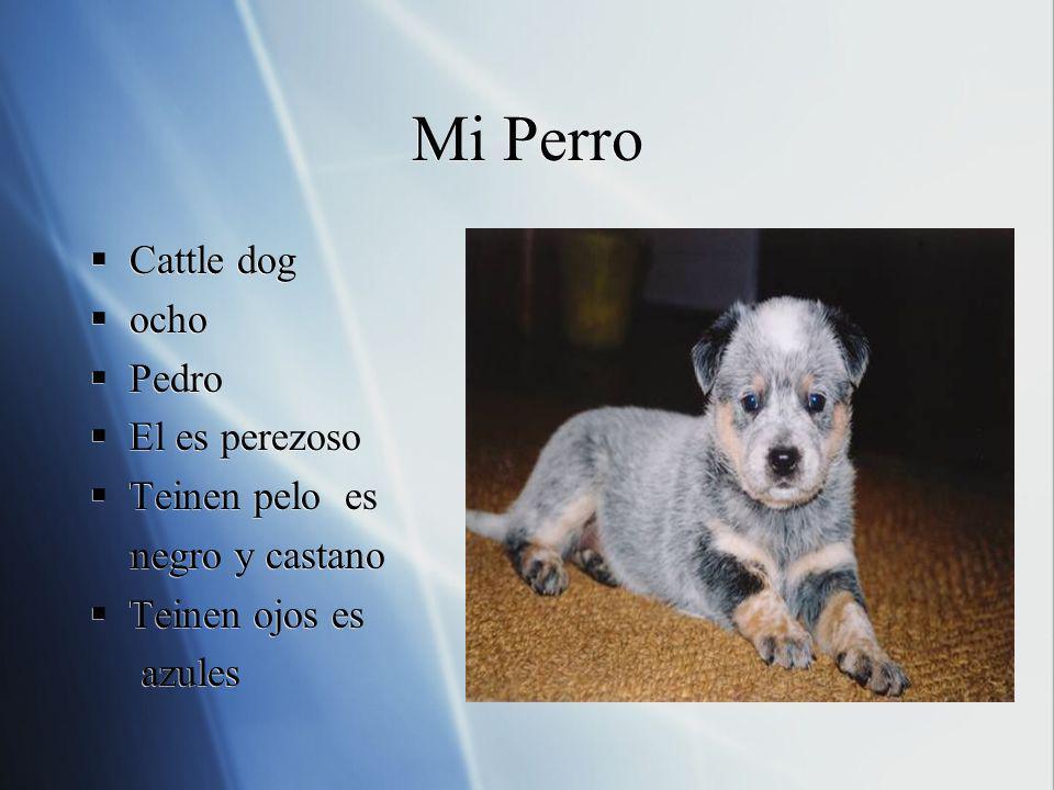 Mi Perro Cattle dog ocho Pedro El es perezoso Teinen pelo es