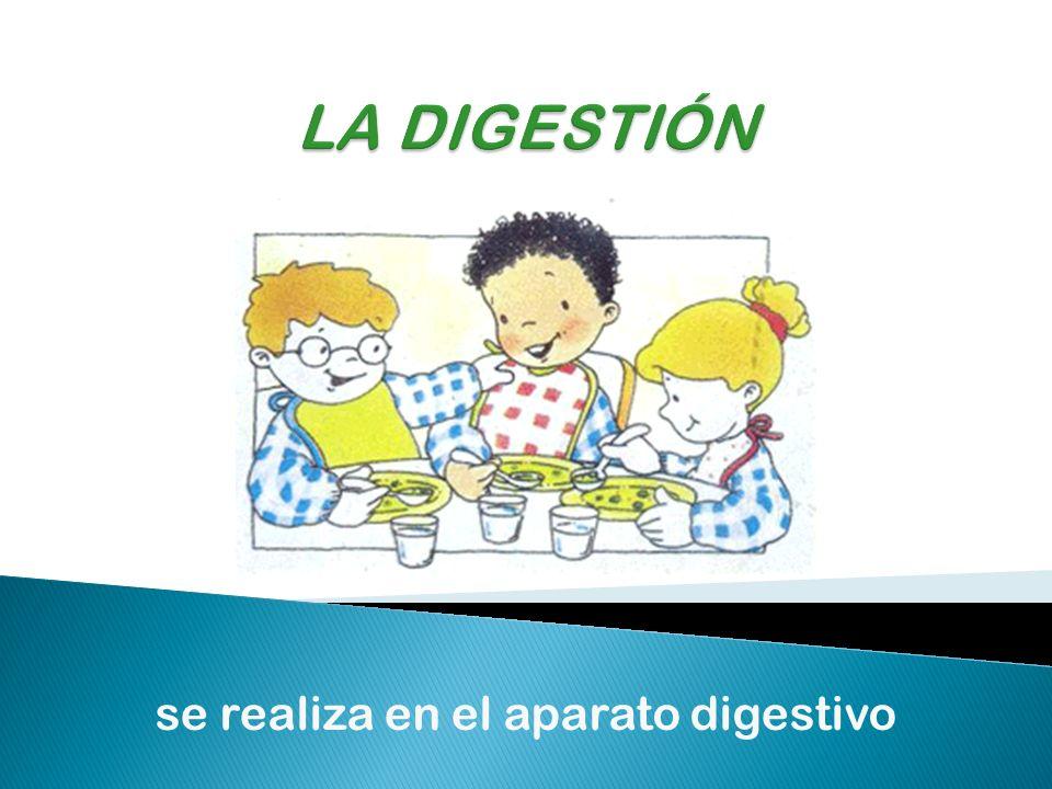 se realiza en el aparato digestivo