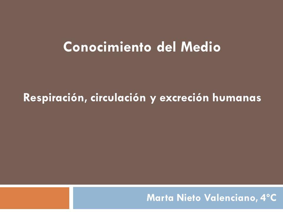 Conocimiento del Medio Respiración, circulación y excreción humanas