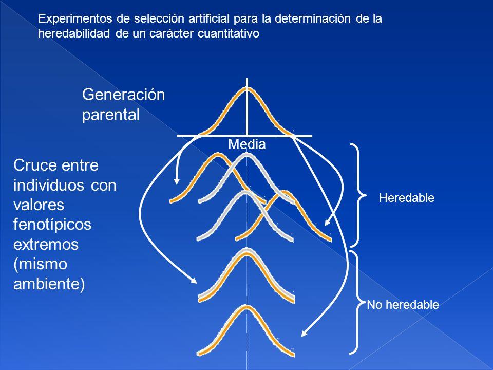 Experimentos de selección artificial para la determinación de la heredabilidad de un carácter cuantitativo