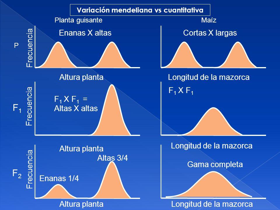 Variación mendeliana vs cuantitativa