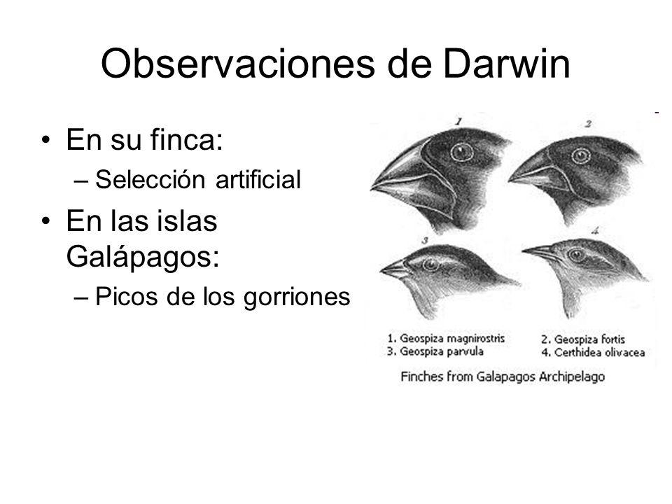 Observaciones de Darwin