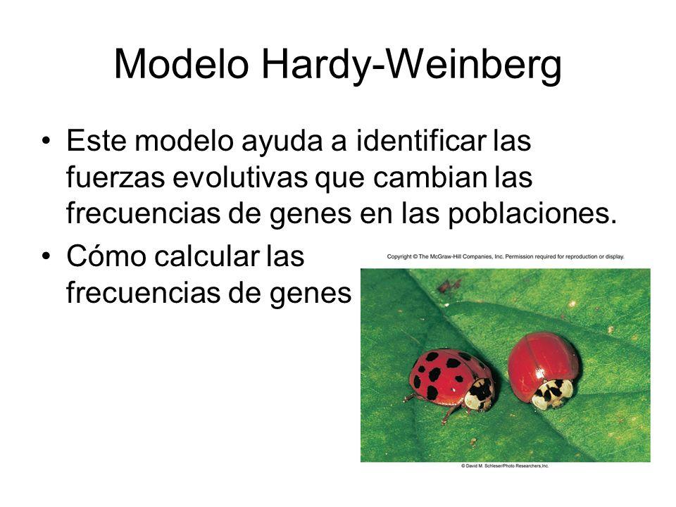 Modelo Hardy-Weinberg