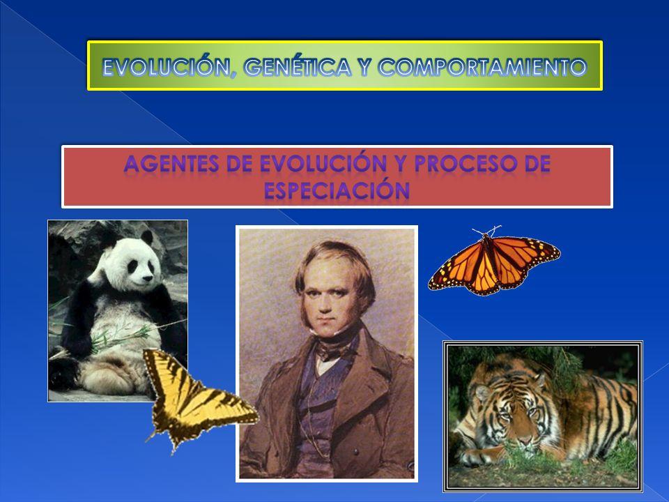 EVOLUCIÓN, GENÉTICA Y COMPORTAMIENTO