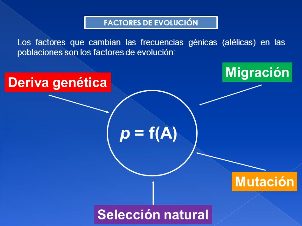 p = f(A) Migración Deriva genética Mutación Selección natural