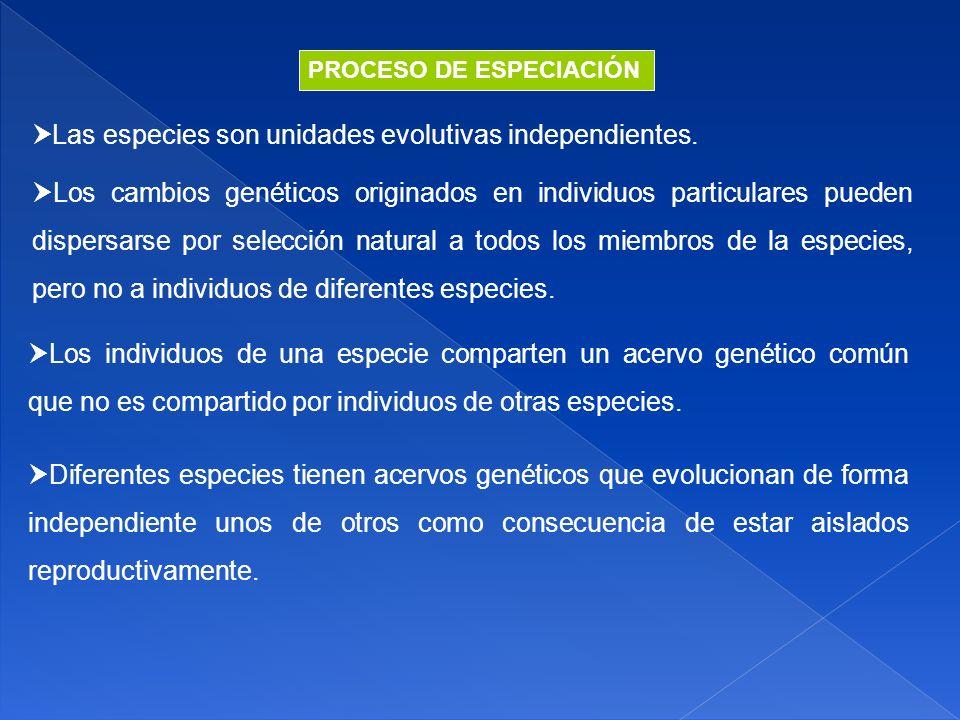 Las especies son unidades evolutivas independientes.