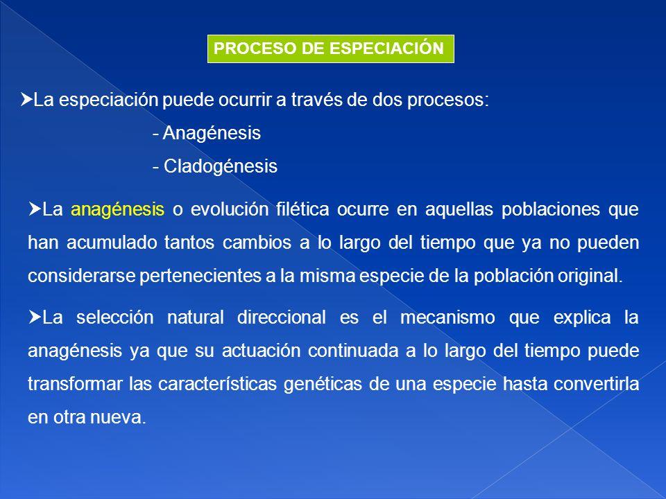 La especiación puede ocurrir a través de dos procesos: - Anagénesis