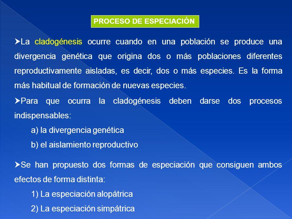 a) la divergencia genética b) el aislamiento reproductivo