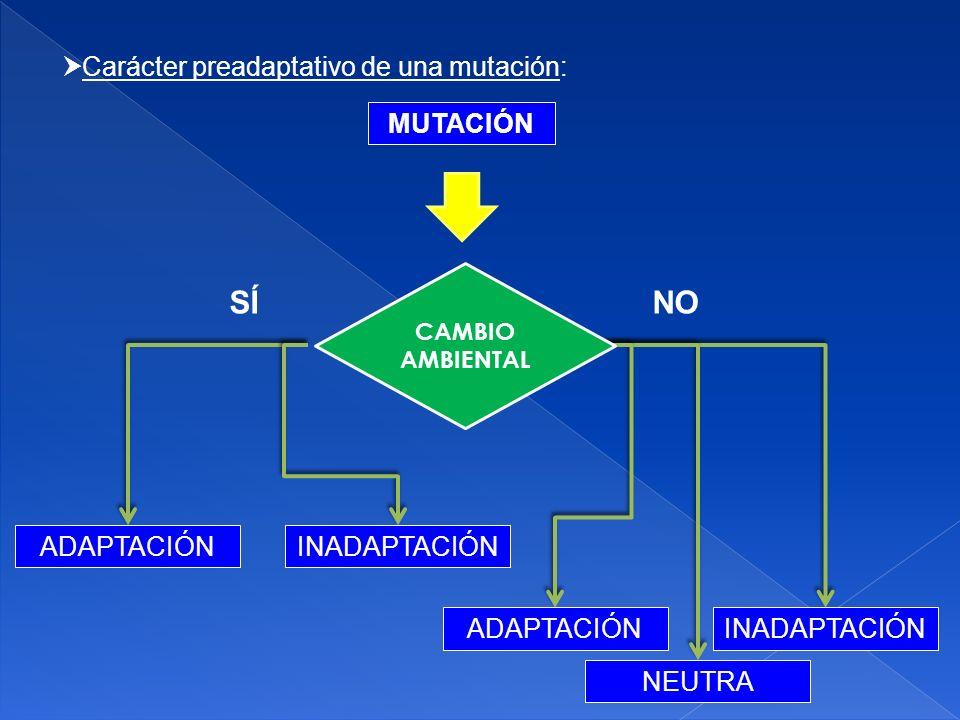 SÍ NO Carácter preadaptativo de una mutación: MUTACIÓN ADAPTACIÓN