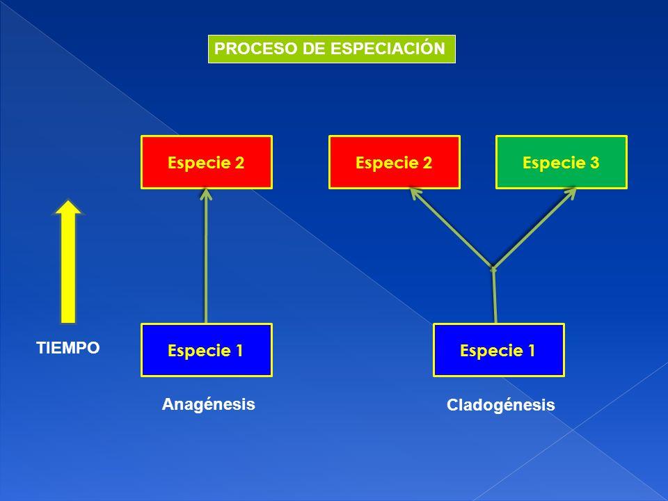PROCESO DE ESPECIACIÓN
