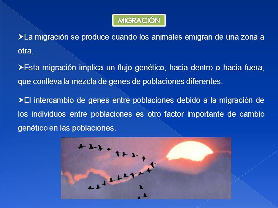 MIGRACIÓN La migración se produce cuando los animales emigran de una zona a otra.