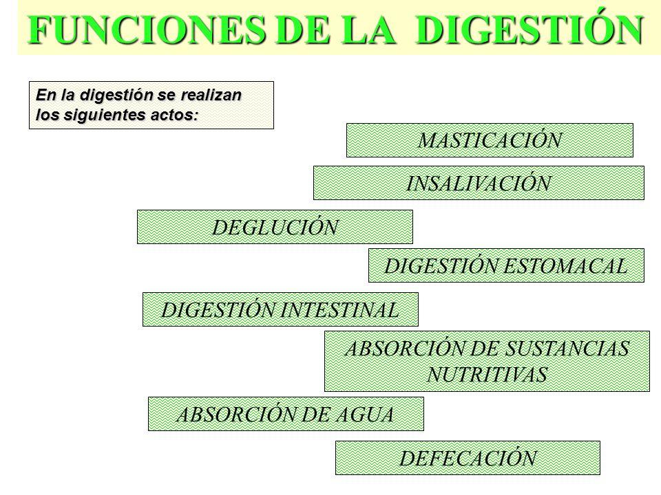 FUNCIONES DE LA DIGESTIÓN