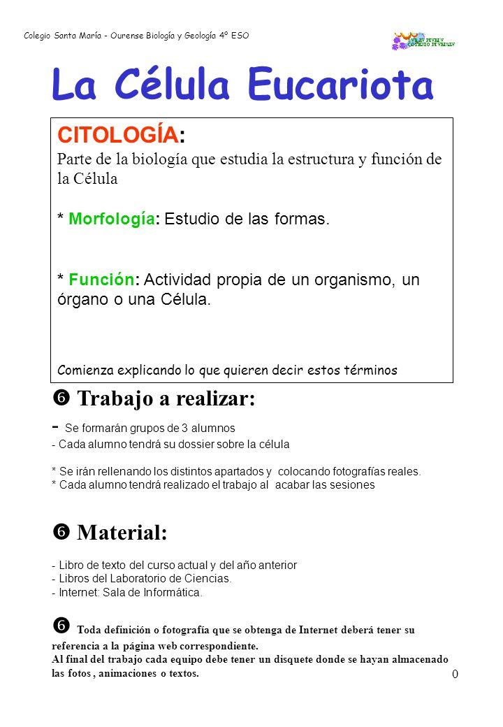 La Célula Eucariota CITOLOGÍA:  Trabajo a realizar: