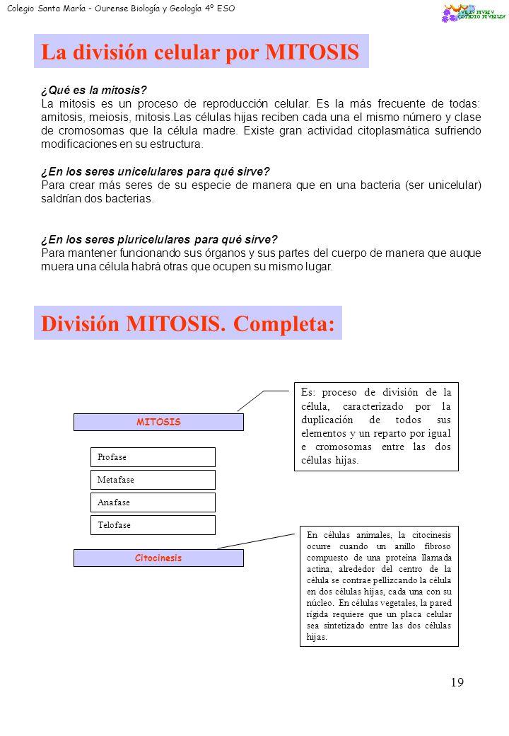 La división celular por MITOSIS