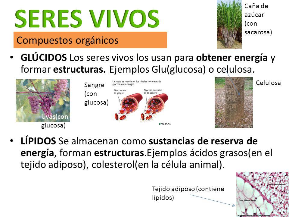 SERES VIVOS Compuestos orgánicos