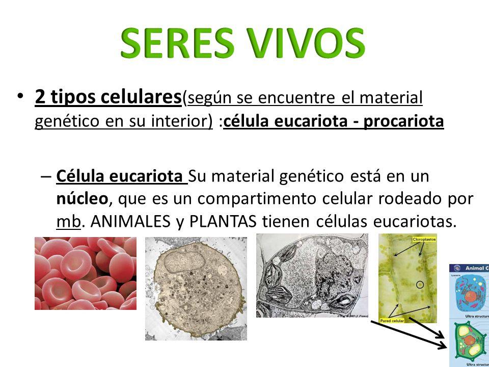 SERES VIVOS 2 tipos celulares(según se encuentre el material genético en su interior) :célula eucariota - procariota.
