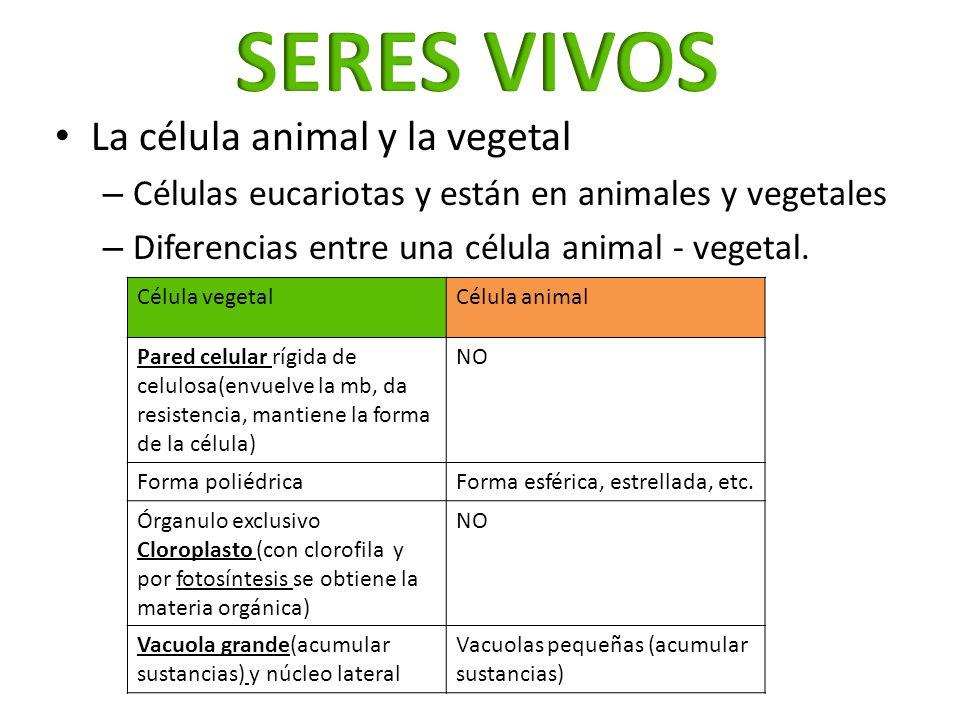 SERES VIVOS La célula animal y la vegetal