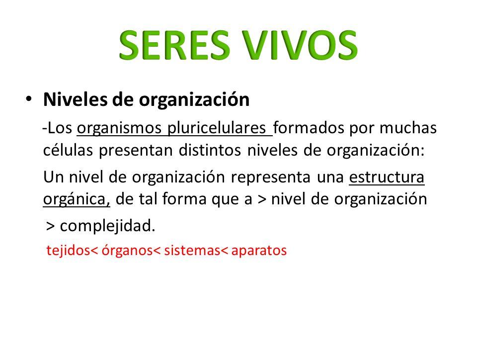 SERES VIVOS Niveles de organización