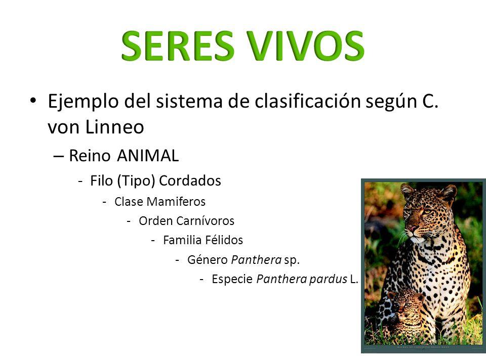 SERES VIVOS Ejemplo del sistema de clasificación según C. von Linneo