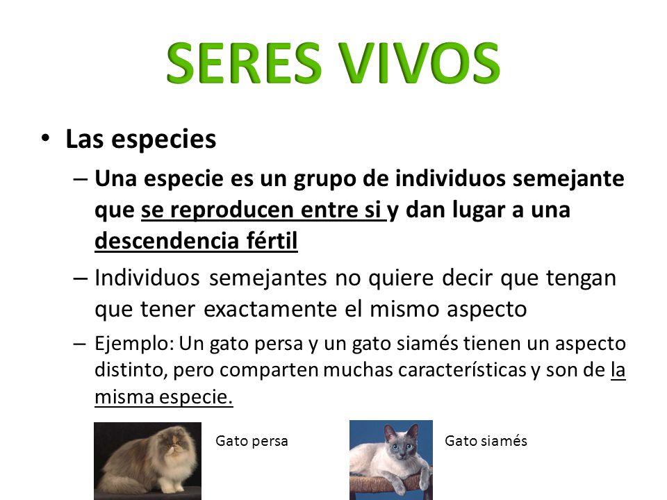 SERES VIVOS Las especies