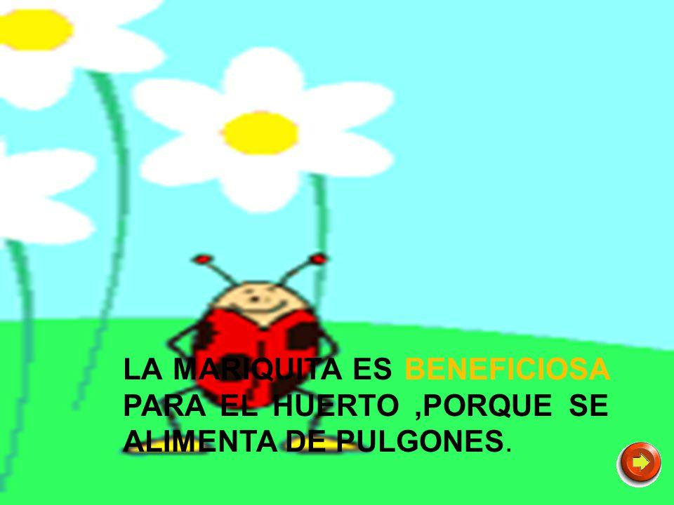 LA MARIQUITA ES BENEFICIOSA PARA EL HUERTO ,PORQUE SE ALIMENTA DE PULGONES.