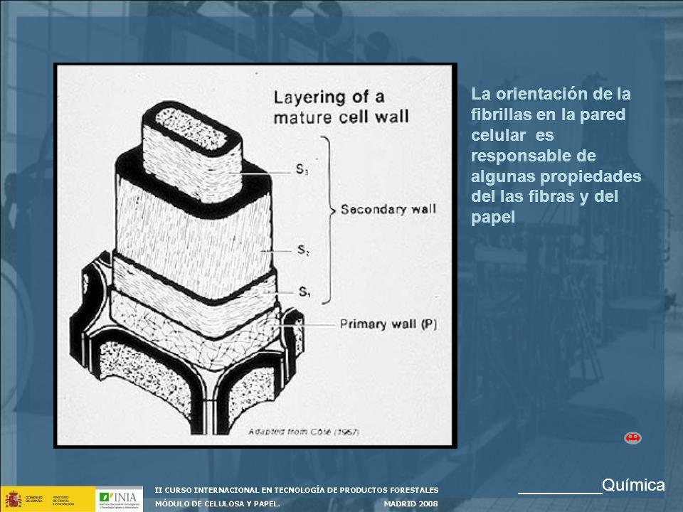 La orientación de la fibrillas en la pared celular es responsable de algunas propiedades del las fibras y del papel