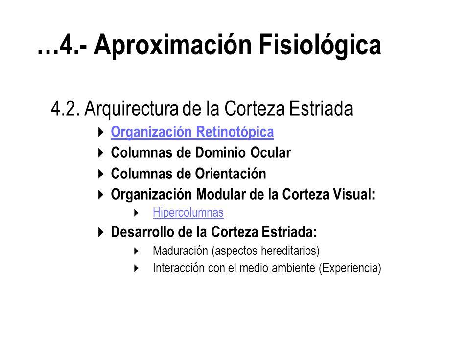 …4.- Aproximación Fisiológica