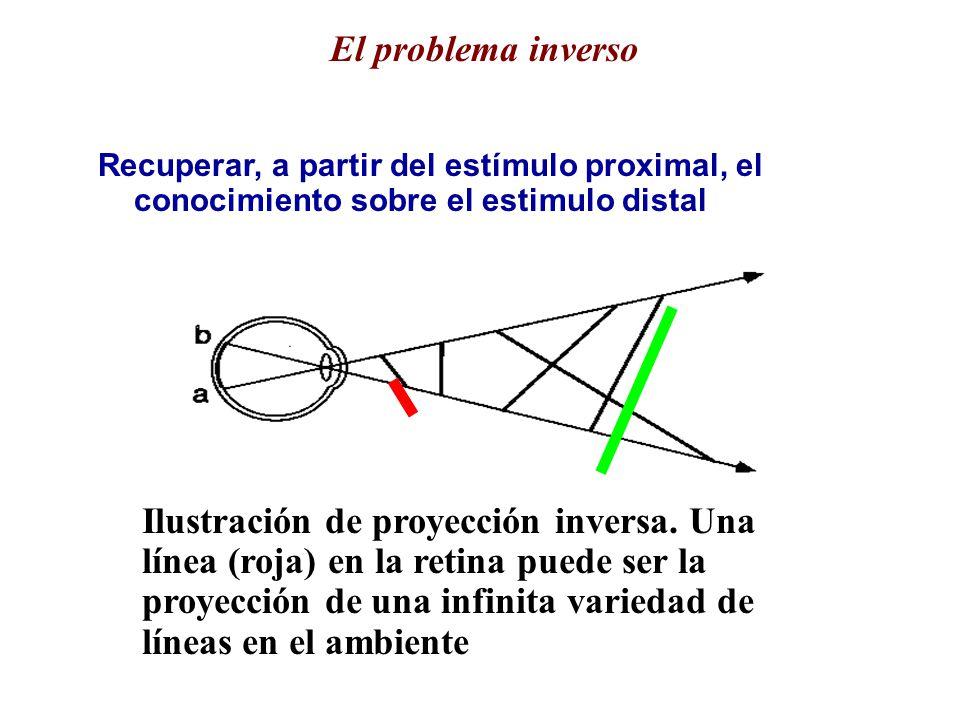 El problema inverso Recuperar, a partir del estímulo proximal, el conocimiento sobre el estimulo distal.