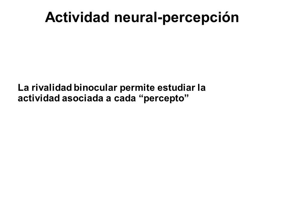 Actividad neural-percepción