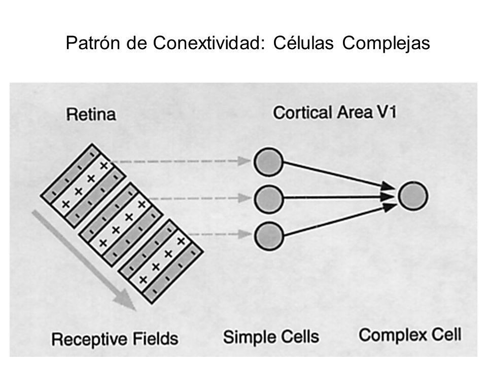 Patrón de Conextividad: Células Complejas