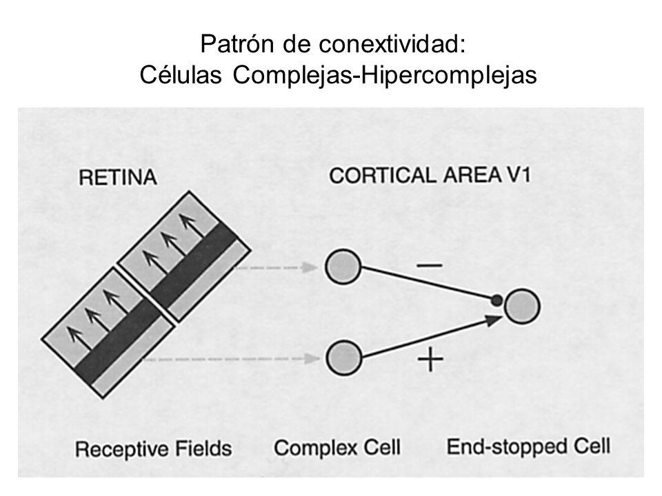 Patrón de conextividad: Células Complejas-Hipercomplejas