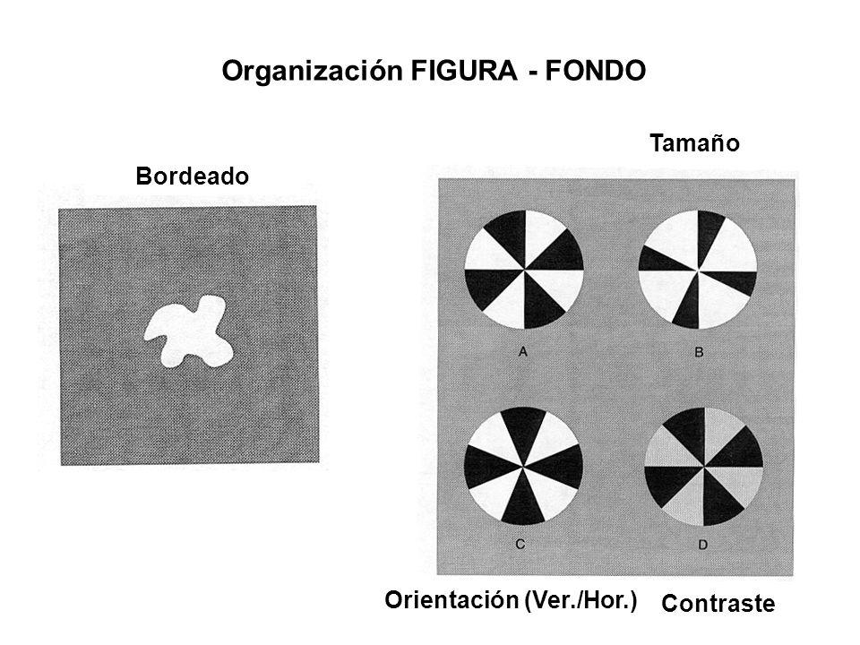 Organización FIGURA - FONDO Orientación (Ver./Hor.)
