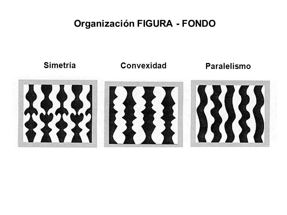 Organización FIGURA - FONDO