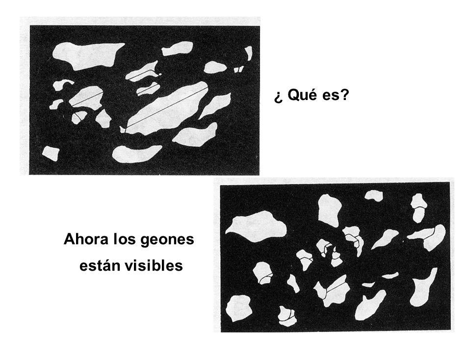 ¿ Qué es Ahora los geones están visibles