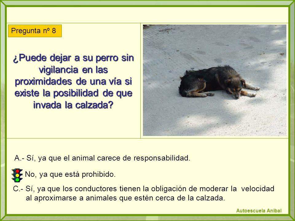 A.- Sí, ya que el animal carece de responsabilidad.