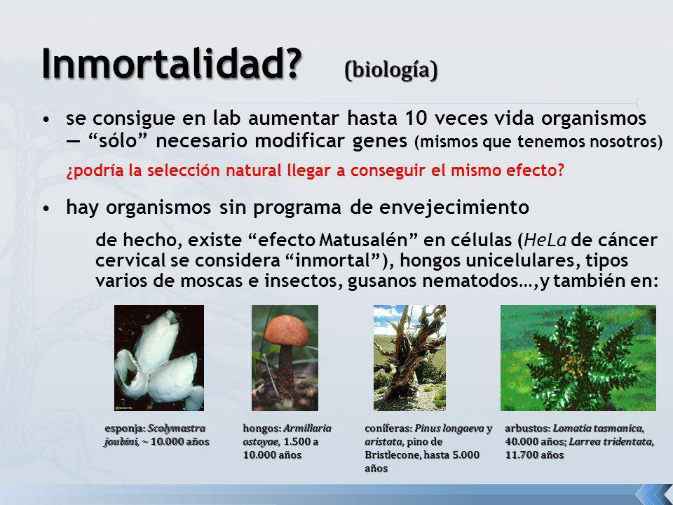 Inmortalidad (biología)