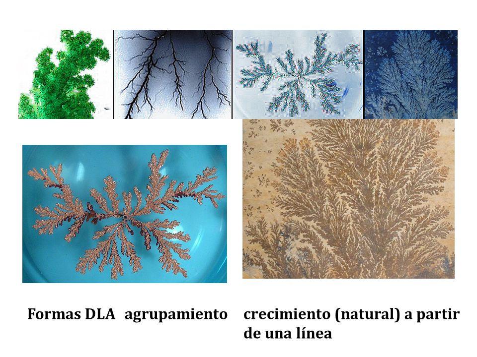 Formas DLA agrupamiento crecimiento (natural) a partir de una línea