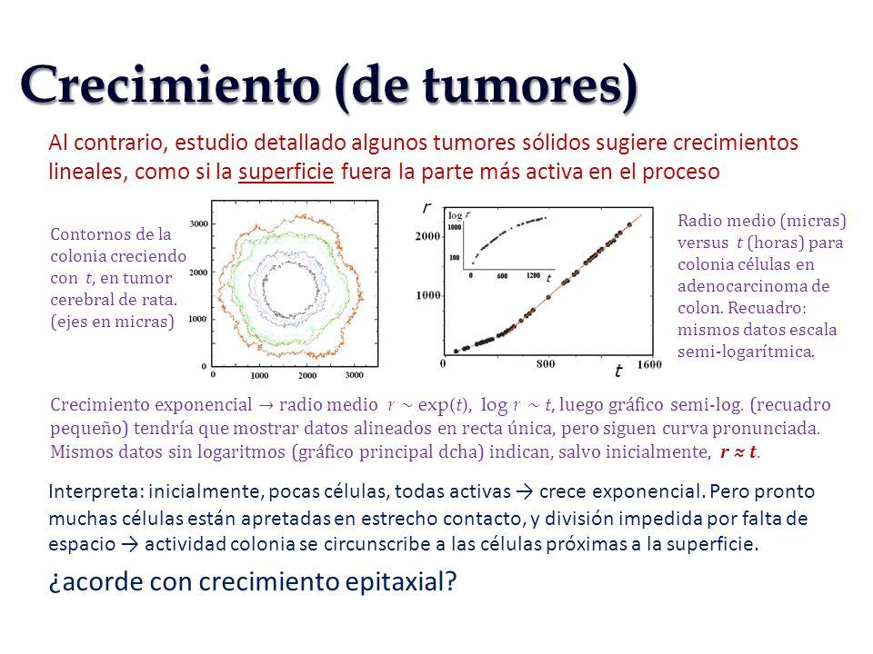 Crecimiento (de tumores)