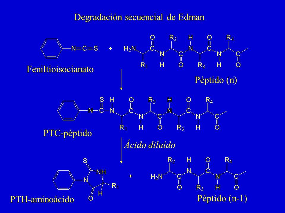 Degradación secuencial de Edman