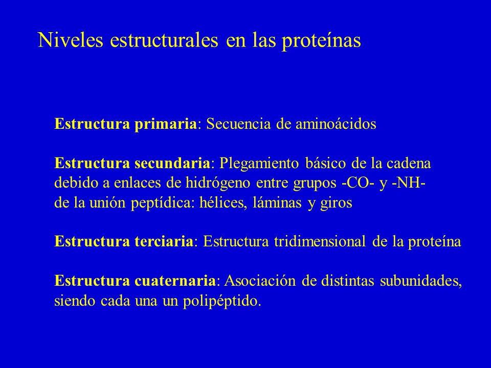 Niveles estructurales en las proteínas