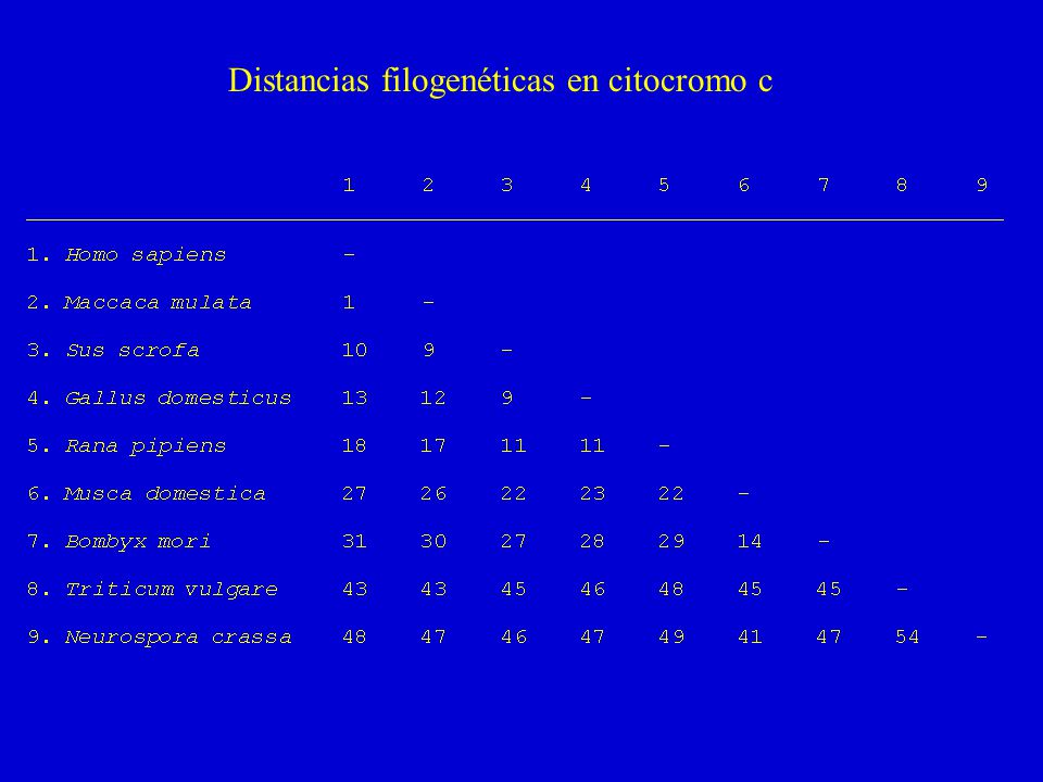 Distancias filogenéticas en citocromo c