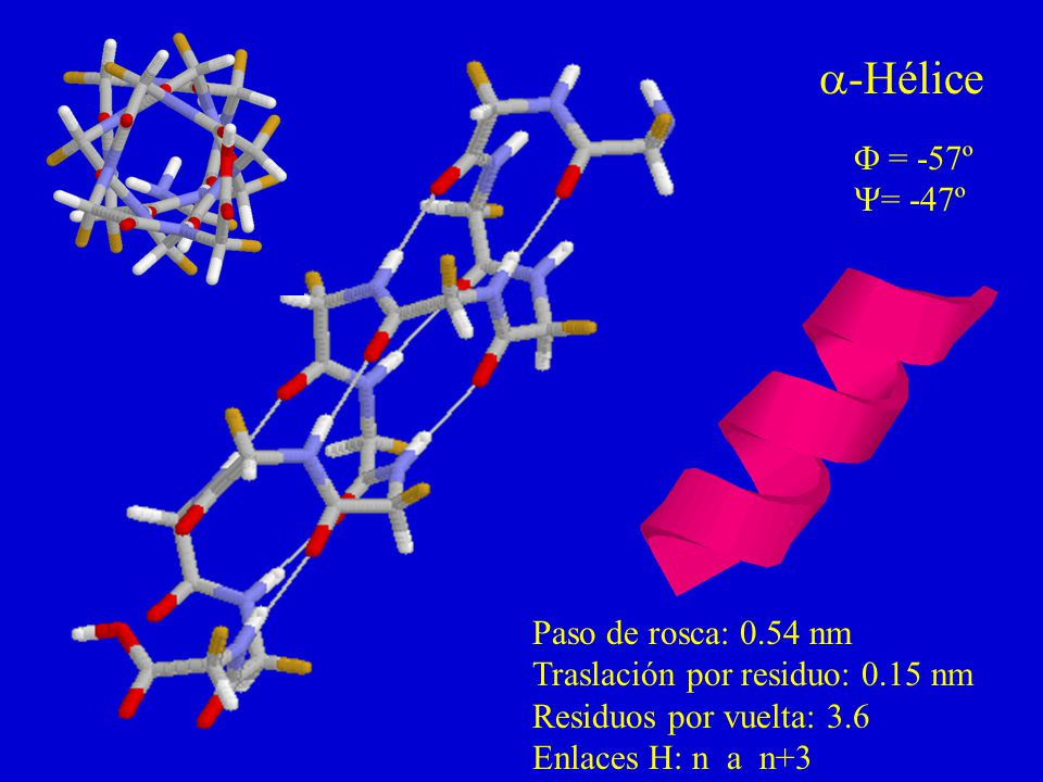 a-Hélice F = -57º Y= -47º Paso de rosca: 0.54 nm