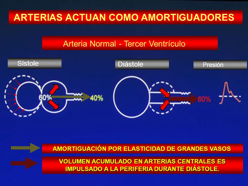 ARTERIAS ACTUAN COMO AMORTIGUADORES