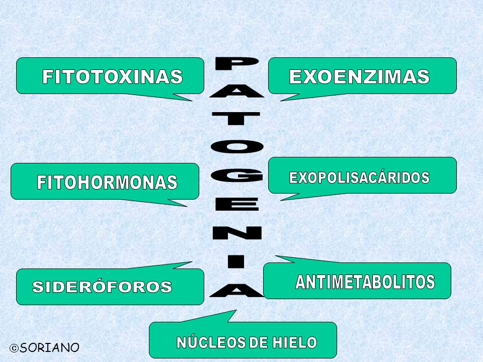 PATOGENIA FITOTOXINAS EXOENZIMAS EXOPOLISACÁRIDOS FITOHORMONAS