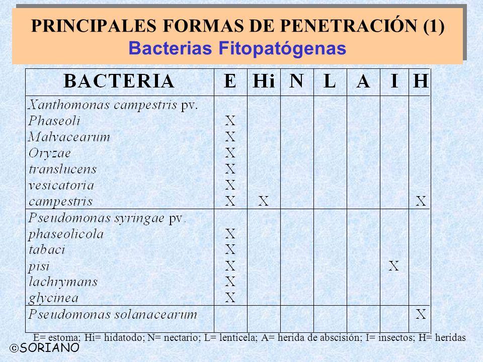 PRINCIPALES FORMAS DE PENETRACIÓN (1) Bacterias Fitopatógenas