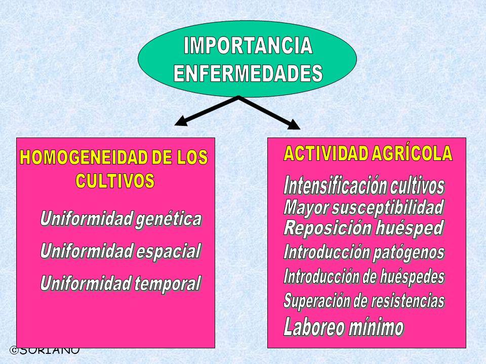 IMPORTANCIA ENFERMEDADES ACTIVIDAD AGRÍCOLA HOMOGENEIDAD DE LOS