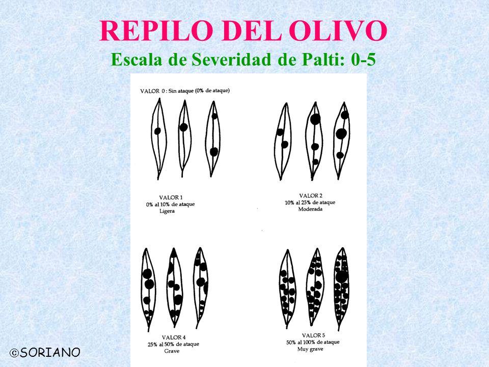 REPILO DEL OLIVO Escala de Severidad de Palti: 0-5