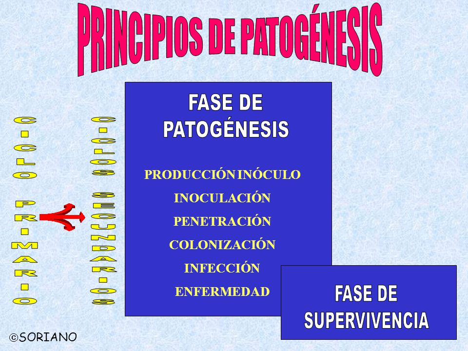 PRINCIPIOS DE PATOGÉNESIS