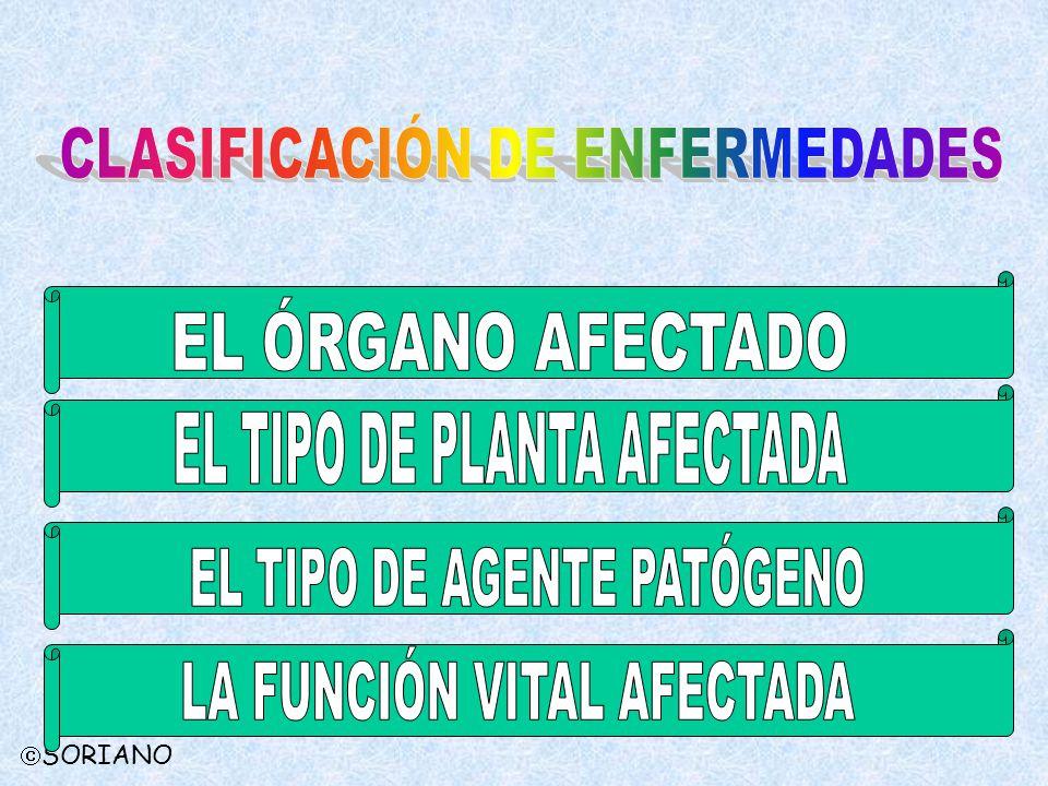 EL TIPO DE PLANTA AFECTADA